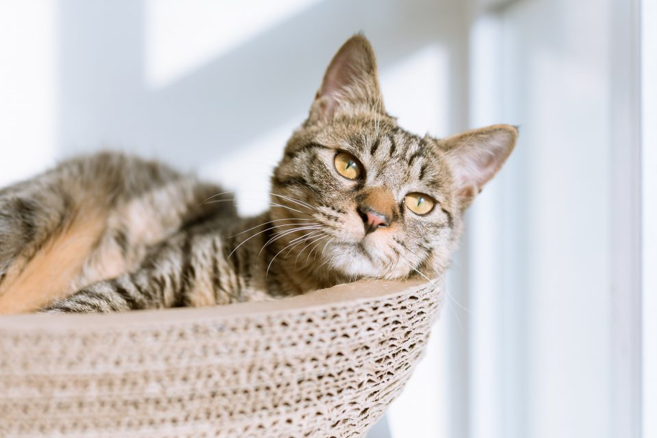 The Suitable Food Plan For Cats With Kidney Illness - The Acutely Aware Cat