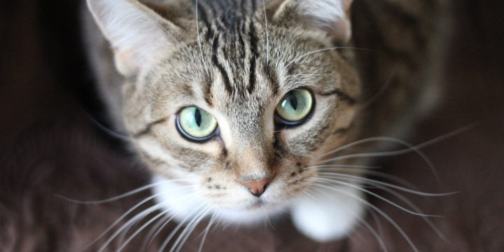 The Suitable Food Plan For Cats With Kidney Illness – The Acutely Aware Cat